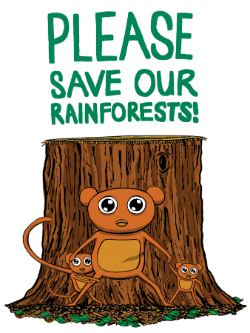 Rainforest1small_0814
