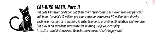 cat-bird-math-part-2